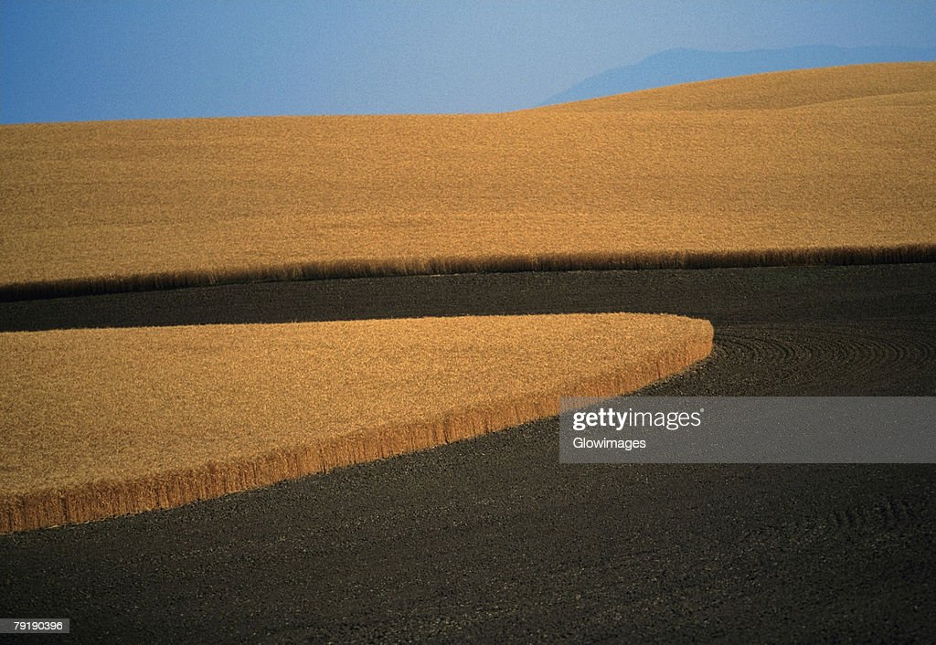 Contour plowed fields of golden wheat, Washington state : Foto de stock