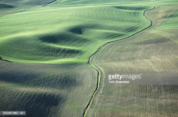 Contour plowing green winter wheat and lentil fields, late Spring, aerial view