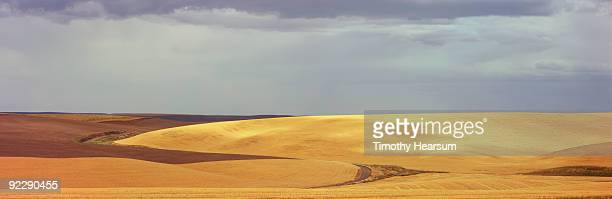 contour with mix of plowed fields and grain - timothy hearsum ストックフォトと画像