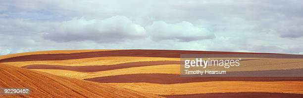 Contour with stripes of plowed fields and grain