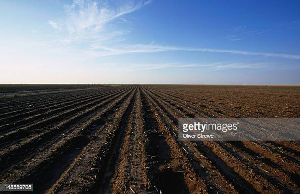 Contoured crop fields for as far as the eye can see in North Texas. Texas has more area of farmland than any state in the USA.
