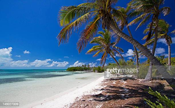 contoy island beach - cancun stock pictures, royalty-free photos & images