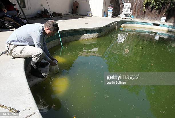 Contra Costa County Mosquito and Vector Control District technician David Wexler releases Gambusia affinis more commonly known as mosquito fish into...
