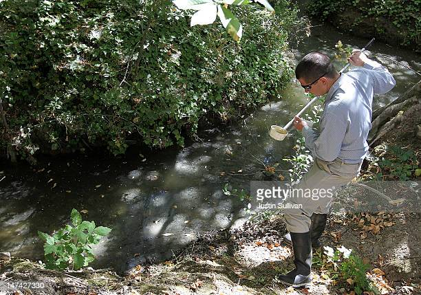 Contra Costa County Mosquito and Vector Control District technician David Wexler looks for mosquito larvae in a water sample from a creek on June 29...