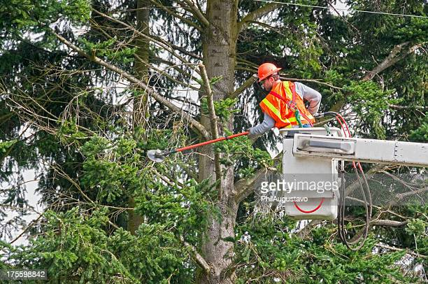 contract worker trimming tree branches away from power lines - cutting stock pictures, royalty-free photos & images