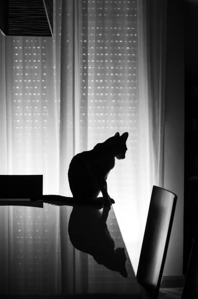 Contraluz de perfil de gato subido a una mesa