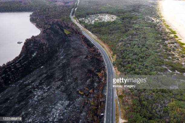 contrast of burnt out destroyed forest alongside a road - australia fire stock pictures, royalty-free photos & images