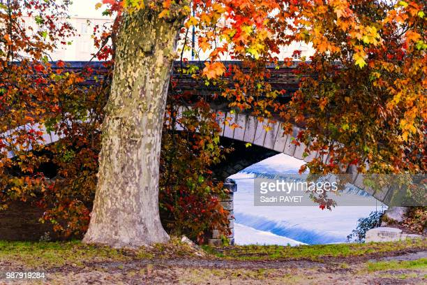 contraste d'automne - payet photos et images de collection