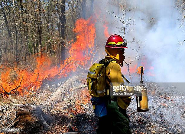 A controlled burn of 20 acres of the Mashpee National Wildlife Refuge took place to destroy invasive lowgrowth brush and allow the land to be more...
