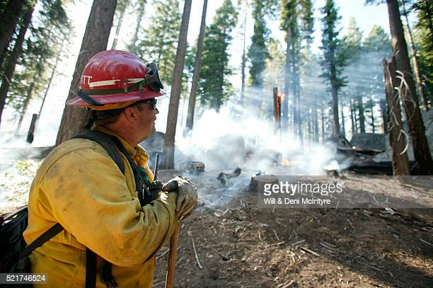 Controlled Forest Burn in Yosemite National Park