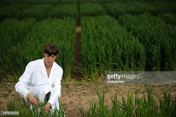 Controlling scientific experiment with crop cultures