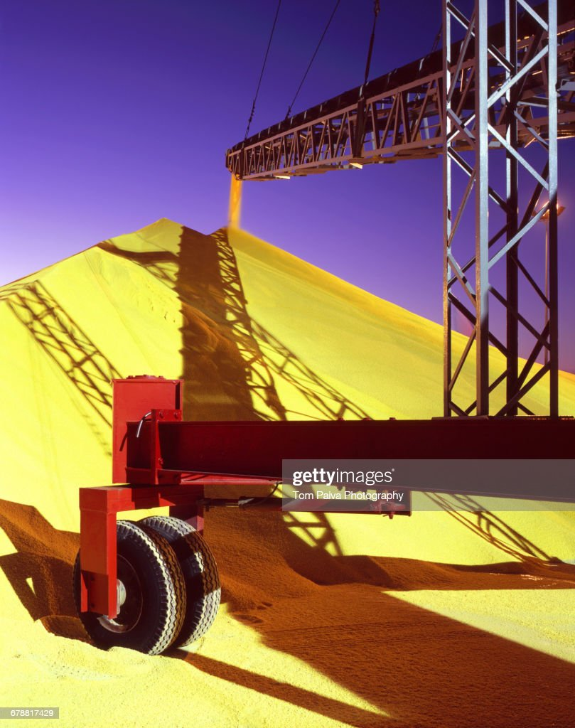 Conveyor Belt Pouring Grain Into Pile At Granary Stock Photo