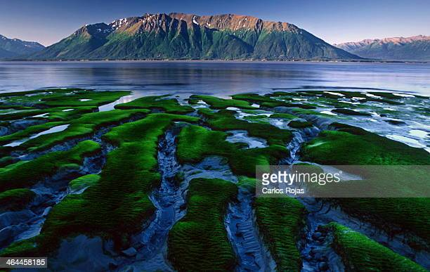 Cook Inlet madflats