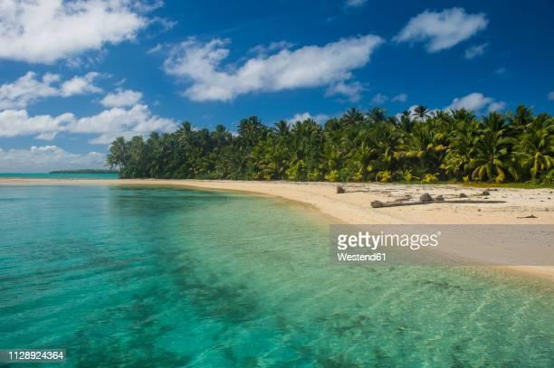 cook islands, rarotonga, aitutaki lagoon, white sand beach and palm beach - rarotonga foto e immagini stock