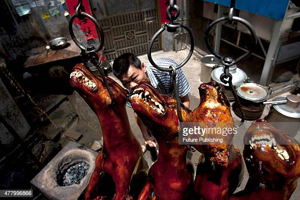 Cook roasts crispy-skin dogs in a restaurant on June 21, 2015 in Yulin, China. Yulin's dog meat festival, where some 10,000 dogs are slaughtered and...
