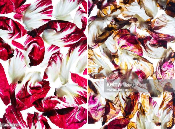 Cooked and Raw Radicchio
