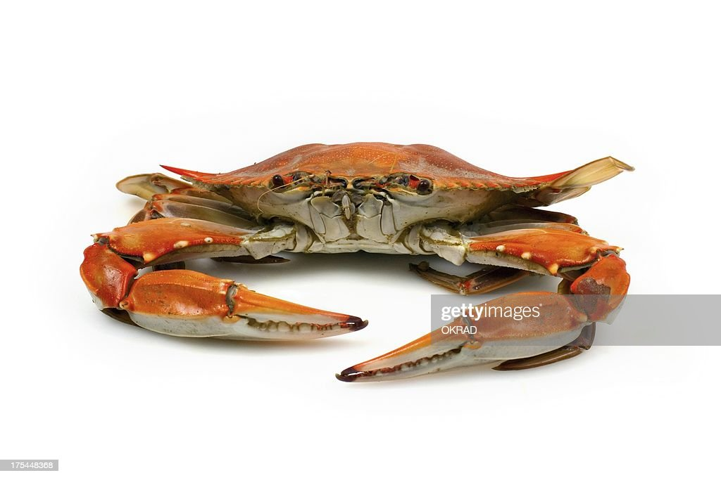 Cooked Blue Crab facing Camera on White Background : Stock Photo