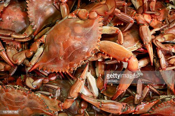 cooked blue crab seafood background - boiled stock pictures, royalty-free photos & images