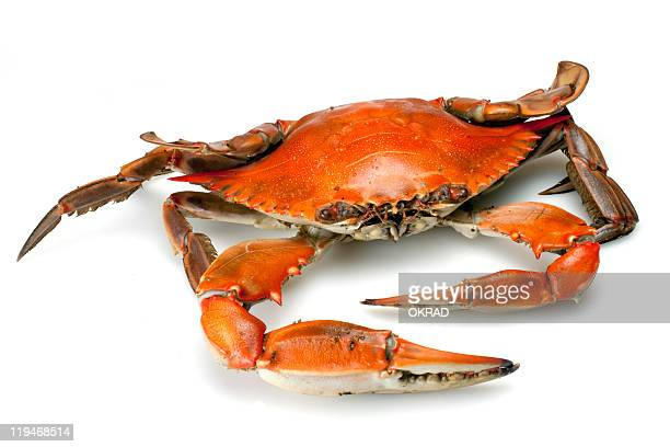 Cooked Blue Crab Single Isolated on White Background