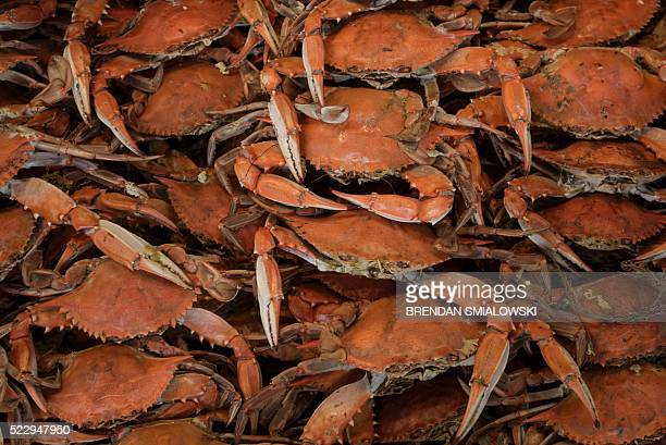 Cooked Blue Crabs are seen at the Maine Avenue Fish Market along the Potomac River on April 21 in Washington DC The market has been in continuous...