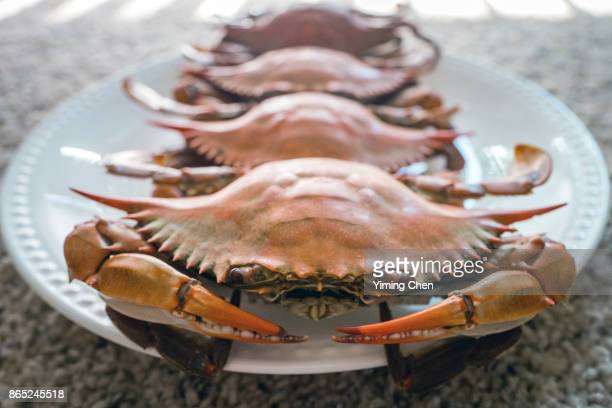 cooked blue crabs - crab stock photos and pictures