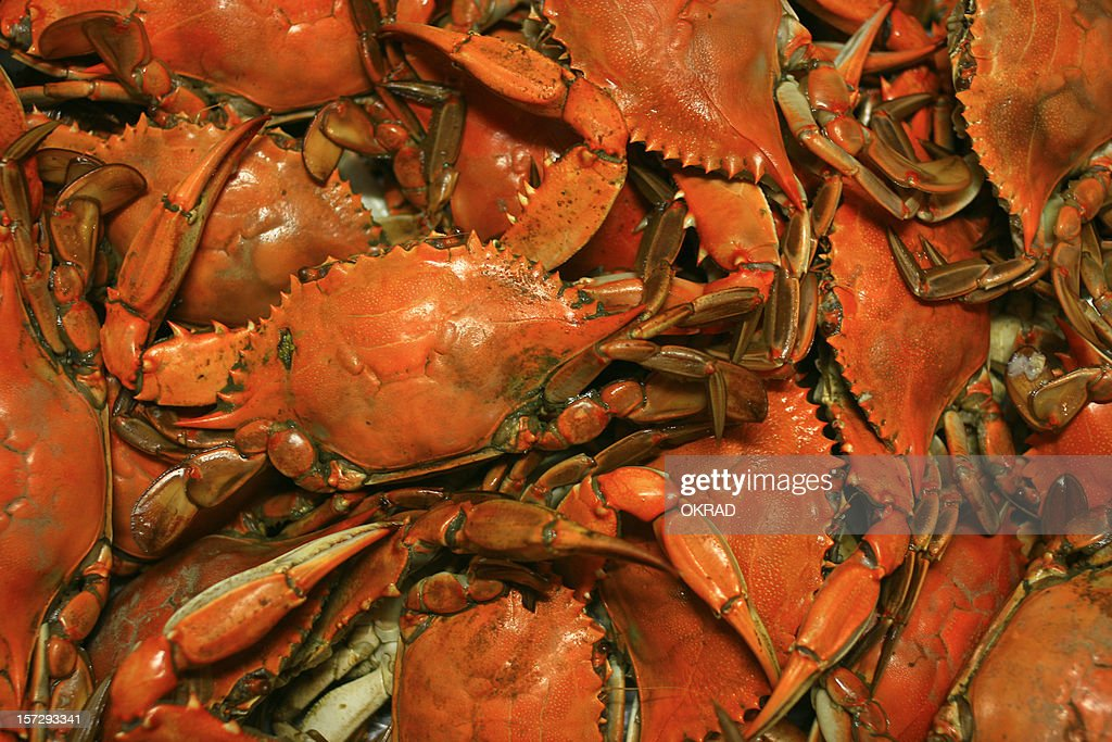 Cooked Chesapeake Bay Blue Crab Background seafood Pattern : Stock Photo