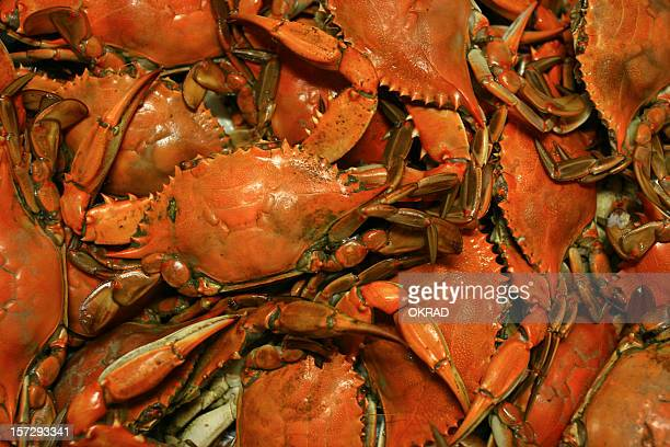 Cooked Chesapeake Bay Blue Crab Background seafood Pattern