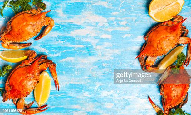 cooked crabs on blue background - krabben meeresfrüchte stock-fotos und bilder