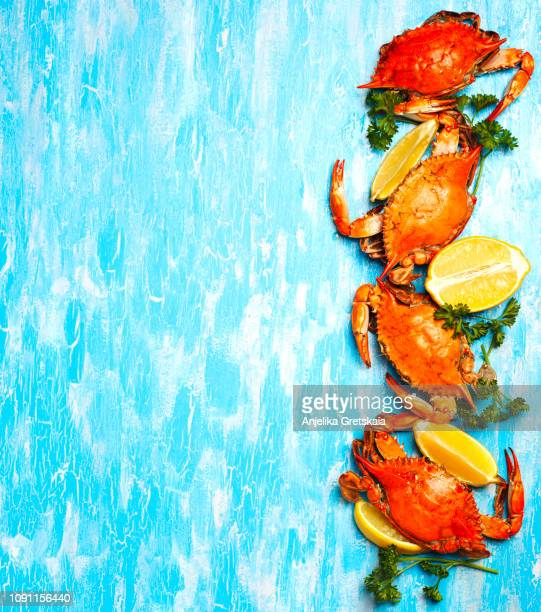 cooked crabs on blue background - crab leg stock photos and pictures