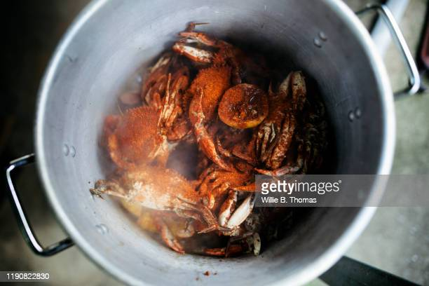 cooked crabs steaming in a pot at a family cookout - crab stock pictures, royalty-free photos & images