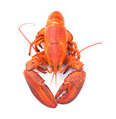 cooked steamed lobster isolated white background