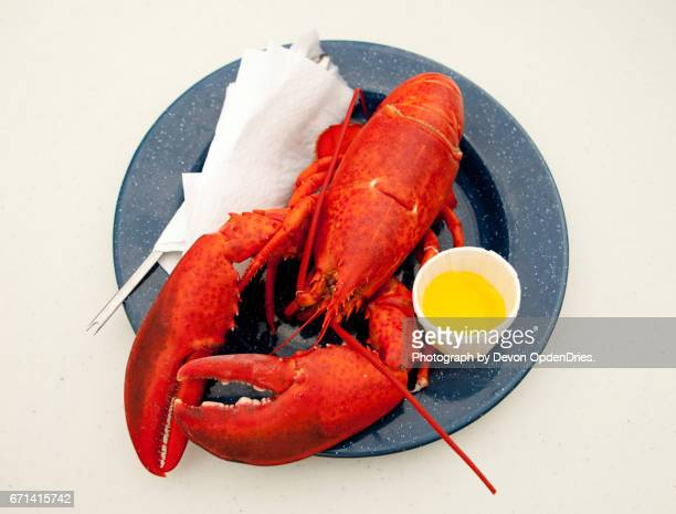 Cooked Lobster on Blue Enamel Plate