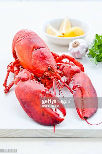Cooked lobster with garlic, lemon and parsley