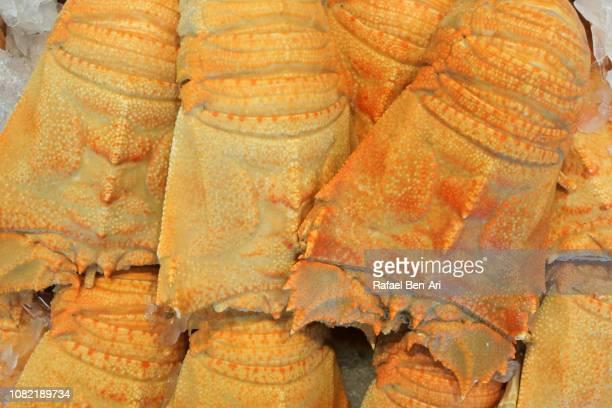 cooked moreton bay bugs - rafael ben ari stock-fotos und bilder