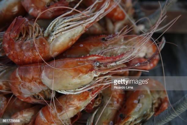 Cooked Shrimp, Mosqueiro Island, Brazil