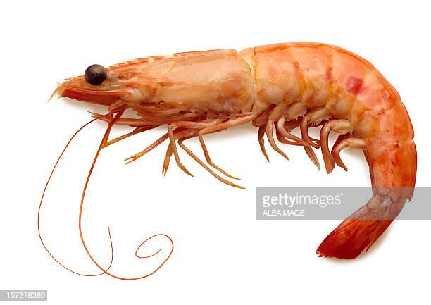 cooked shrimp with full shell isolated on white background - seafood stock pictures, royalty-free photos & images