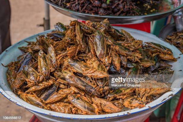 cooked water beetles on sale at market stall, skuon, cambodia - phnom penh stock pictures, royalty-free photos & images