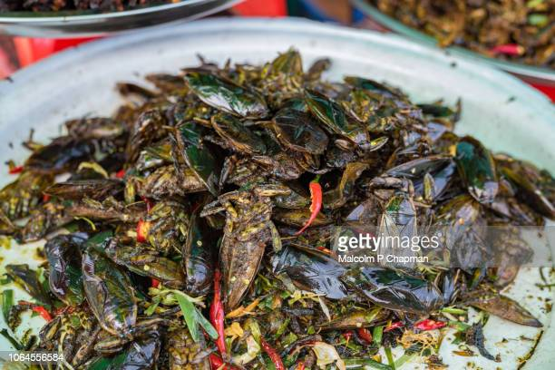 "cooked water beetles on sale at market stall, skuon, cambodia - cambodia ""malcolm p chapman"" or ""malcolm chapman"" stock pictures, royalty-free photos & images"