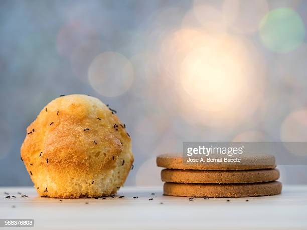 cookies and sponge-cake with ants - ants stock pictures, royalty-free photos & images
