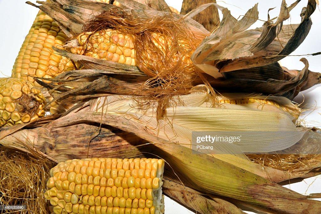 Cooking delicious corn : Bildbanksbilder