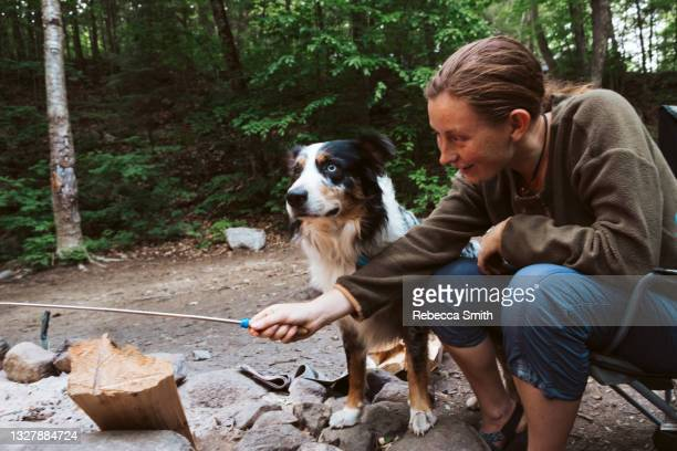cooking hotdogs over campfire - national forest stock pictures, royalty-free photos & images