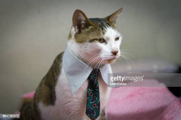Cool cat wearing business wear
