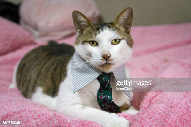 cool cat wearing business wear - cat family stock photos and pictures