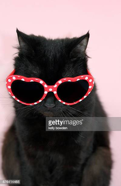 cool cat wearing sunglasses