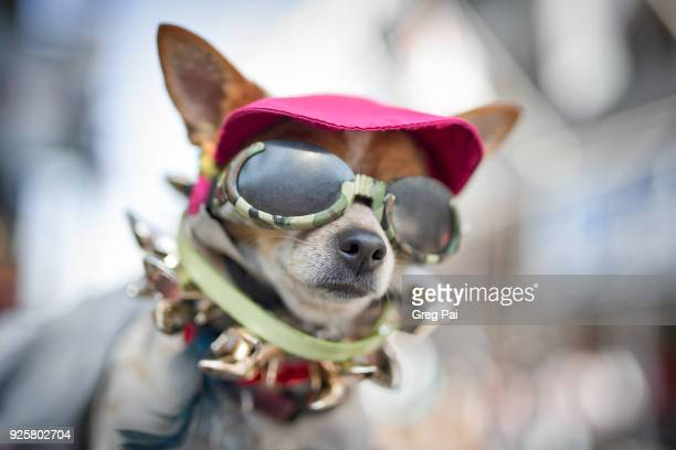 cool dog in new orleans mardi gras - mardi gras fun in new orleans stock photos and pictures
