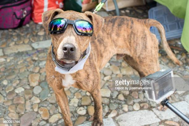 Cool dog in sunglasses