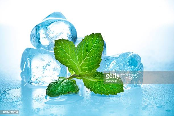 cool mint - mint leaf stock photos and pictures