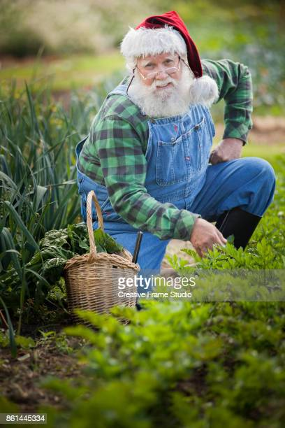 Cool Santa Claus gardening and harvesting with his wicker basket