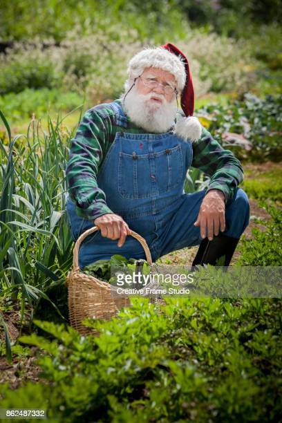 Cool Santa gardening and harvesting on crouching position with his wicker basket