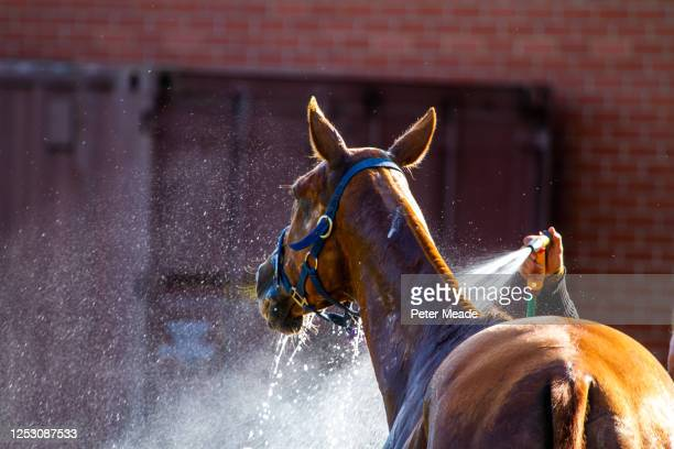 cooling down after polo - polo stock pictures, royalty-free photos & images